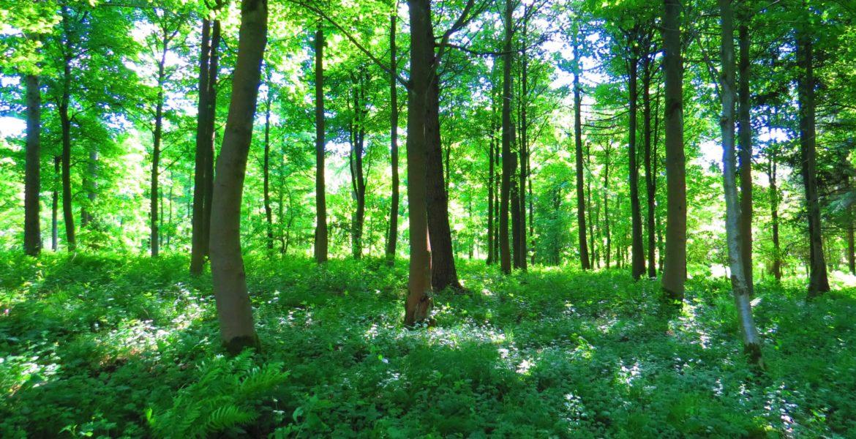 Orman yangınlarının psikolojik etkileri